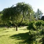 Det gamla äppleträdet
