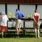 Plantförsäljning