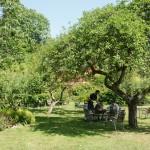 Kaffe under det gamla äppleträdet